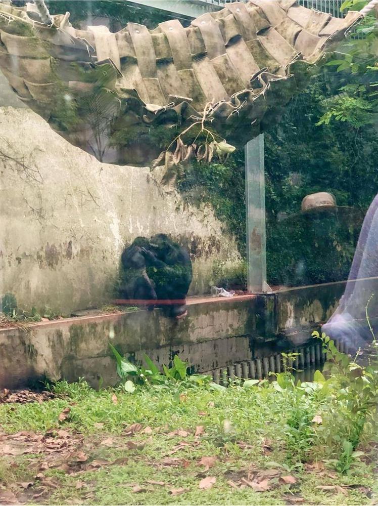Màn review sở thú không giống ai của cô gái khiến dân tình cười bò-3