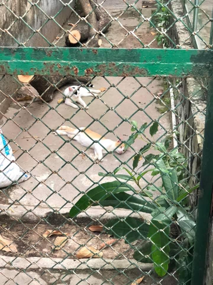 Màn review sở thú không giống ai của cô gái khiến dân tình cười bò-6