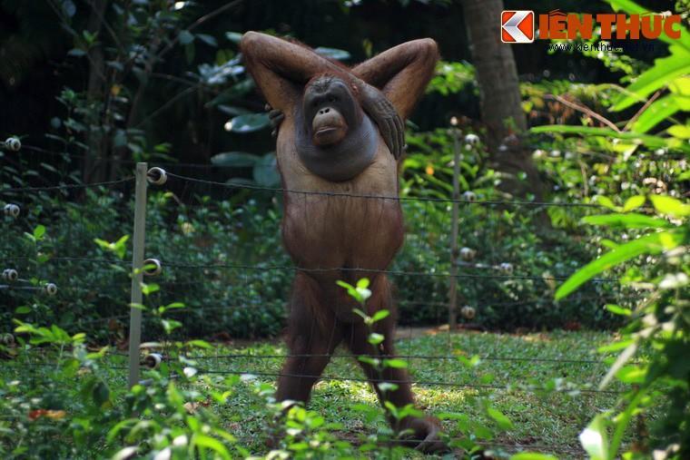 Màn review sở thú không giống ai của cô gái khiến dân tình cười bò-9