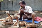 Phía sau màn điều khiển rắn bằng nhạc ở Ấn Độ