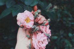 Ngày 20/10, cung hoàng đạo nào nhận quà nhận hoa mệt nghỉ từ người thân yêu?