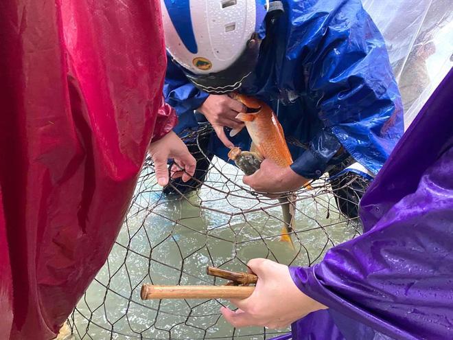 Ngập nặng, người dân TP Hà Tĩnh dùng bu gà, vợt tự chế ra đường bắt cá-3