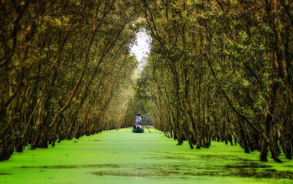 Chìm đắm trong màu xanh mê hoặc của rừng tràm Trà Sư mùa nước nổi-1