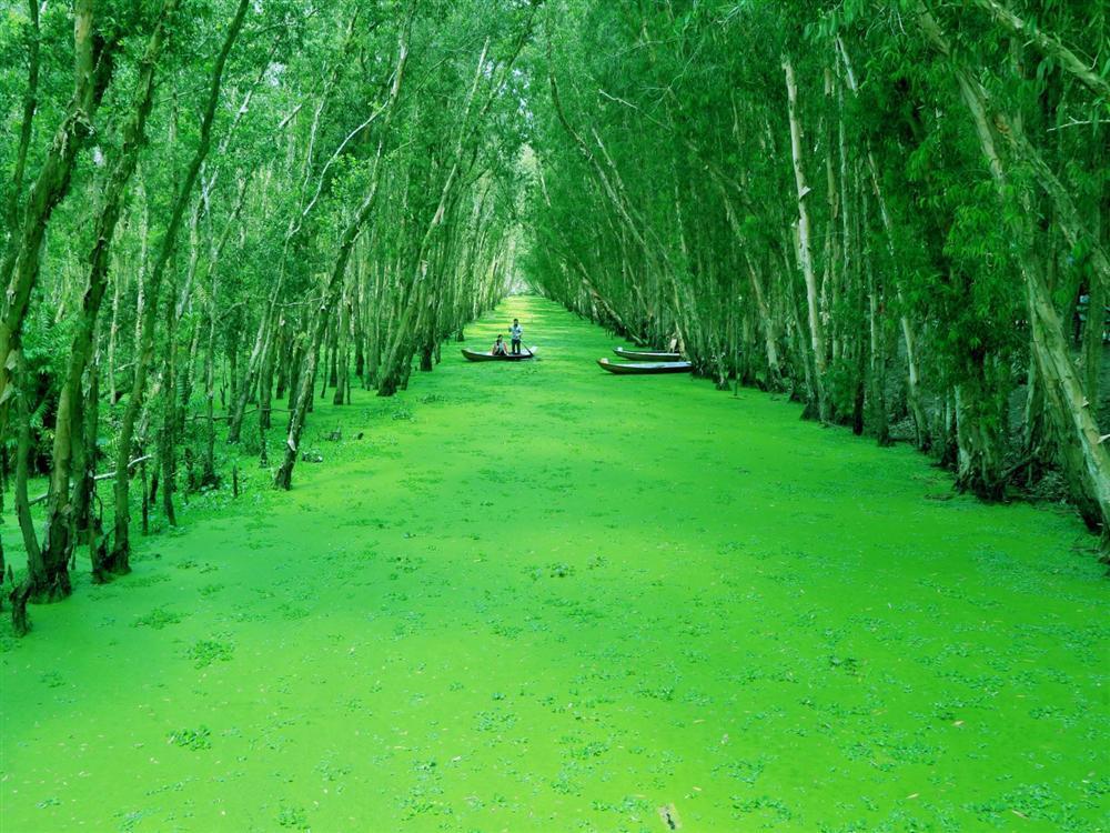 Chìm đắm trong màu xanh mê hoặc của rừng tràm Trà Sư mùa nước nổi-2