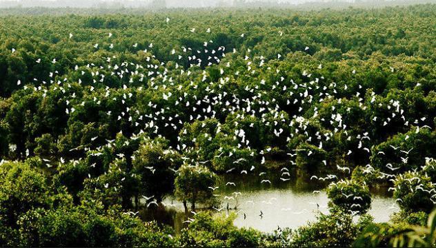 Chìm đắm trong màu xanh mê hoặc của rừng tràm Trà Sư mùa nước nổi-3