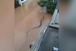 Hú hồn cảnh 'bé Na' dài 2 mét rong chơi giữa con hẻm ngập nước