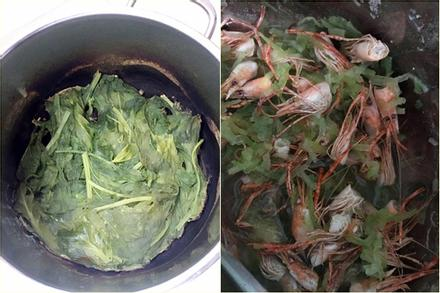Loạt ảnh chứng minh hội đoảng hễ vào bếp là tạo ra thảm họa, kể cả nấu rau cũng bất thành