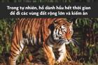 Số phận của hổ trong các gánh xiếc