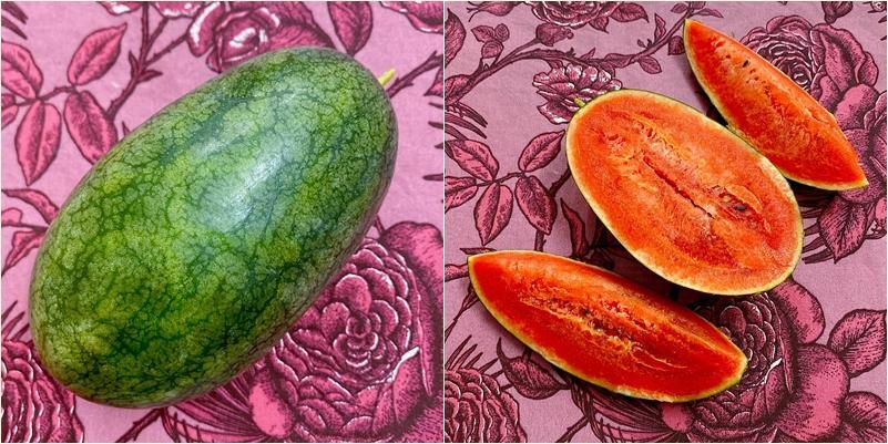 Nhờ chồng thả hạt giống cho vui, vợ 8X có vựa dưa hấu lủng lẳng trái ngọt ngay dưới gốc hồng-7