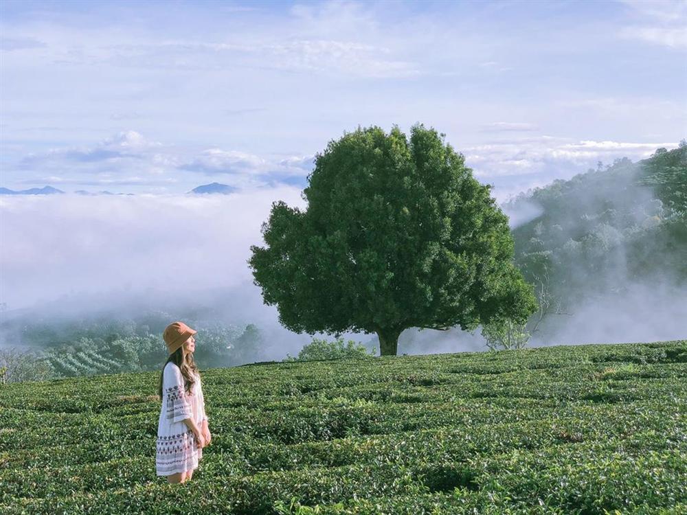 Rủ đám bạn đi check-in ngay những đồi chè đẹp thơ mộng nhất Việt Nam-15