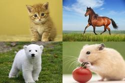 Bạn muốn hóa thân thành loài vật nào? Câu trả lời tiết lộ điều bạn cần nhất lúc này