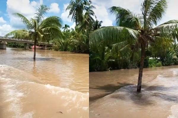 Cây dừa kỳ lạ mọc giữa lòng sông ở Bến Tre: Chuyện tưởng đùa nhưng hóa ra lại có thật-2