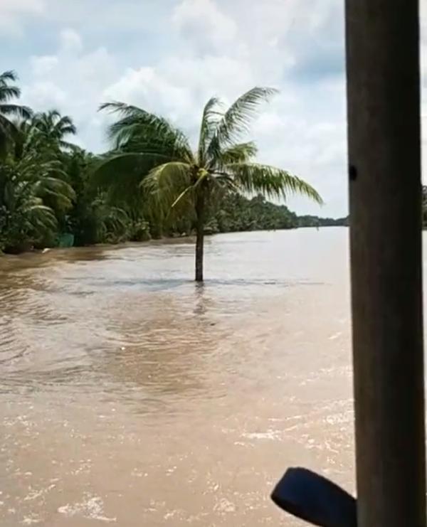 Cây dừa kỳ lạ mọc giữa lòng sông ở Bến Tre: Chuyện tưởng đùa nhưng hóa ra lại có thật-3