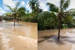 Cây dừa kỳ lạ mọc giữa lòng sông ở Bến Tre: Chuyện tưởng đùa nhưng hóa ra lại có thật