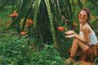 Lạc giữa vườn thanh long ở Bình Thuận