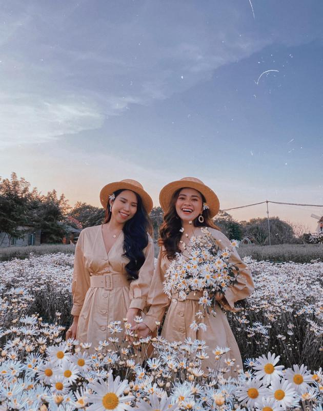 Định vị ngay những tọa độ chụp Cúc Họa Mi đẹp nhất Hà Nội vào mùa này-4