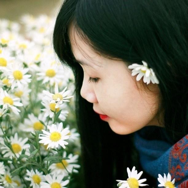 Định vị ngay những tọa độ chụp Cúc Họa Mi đẹp nhất Hà Nội vào mùa này-6
