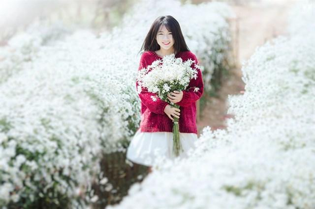 Định vị ngay những tọa độ chụp Cúc Họa Mi đẹp nhất Hà Nội vào mùa này-13