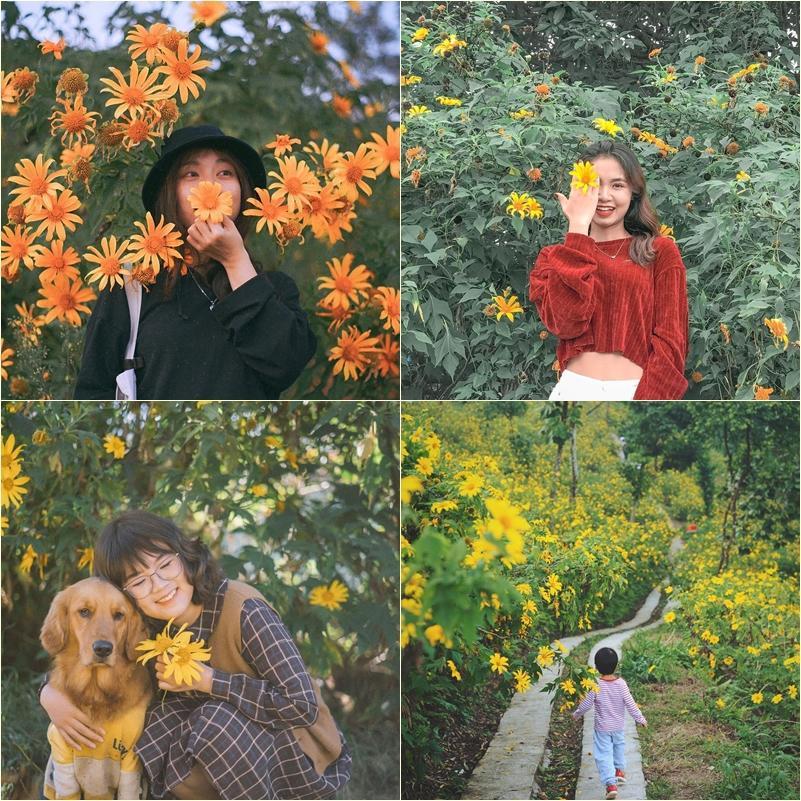 Chỉ cần lạc bước giữa mùa hoa dã quỳ Đà Lạt, các chị em chẳng cần tạo dáng cũng ăn hình-3