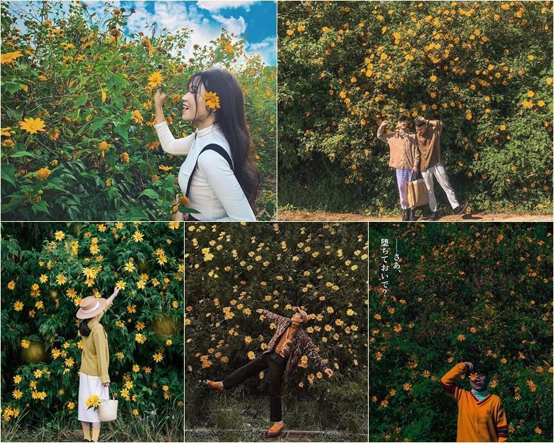Chỉ cần lạc bước giữa mùa hoa dã quỳ Đà Lạt, các chị em chẳng cần tạo dáng cũng ăn hình-4