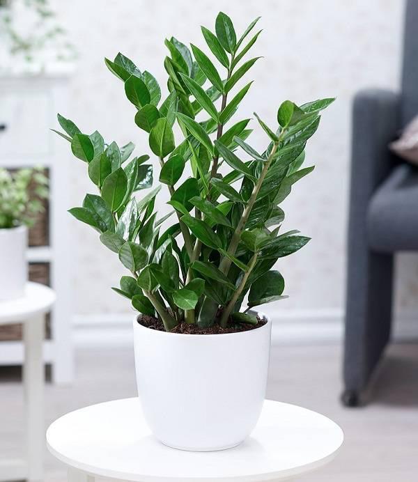 7 loại cây phong thủy vừa thanh lọc không khí vừa mang tài lộc, phú quý cho gia chủ-1