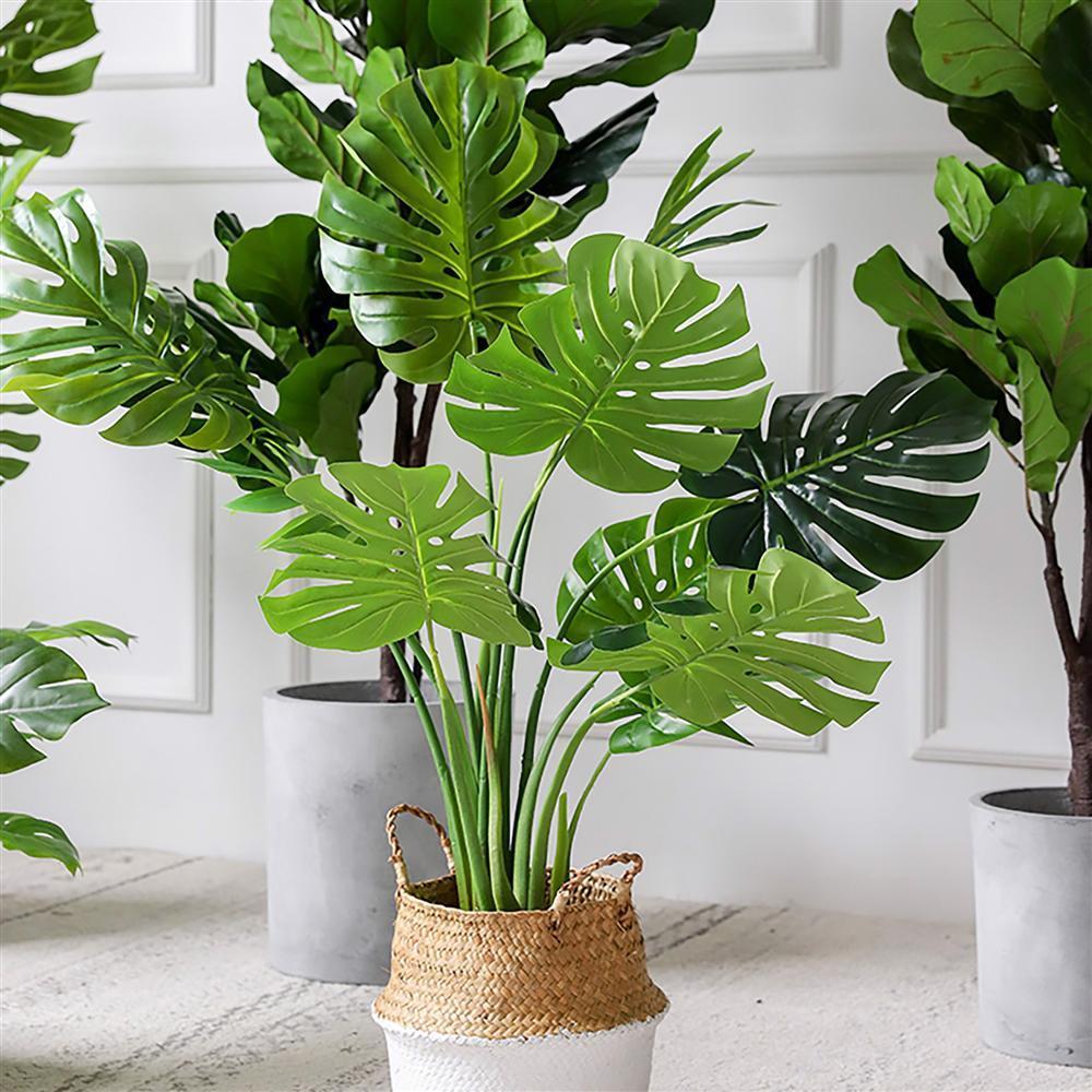 7 loại cây phong thủy vừa thanh lọc không khí vừa mang tài lộc, phú quý cho gia chủ-3