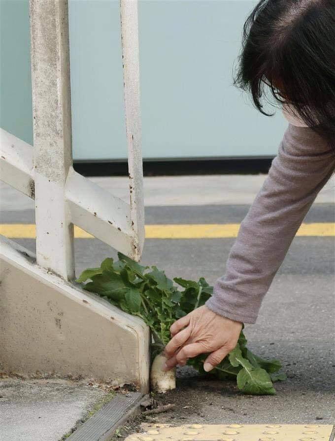 Số phận dễ đoán của cây củ cải trắng mọc nơi không tưởng thu hút dân tình đến check-in ầm ầm-3