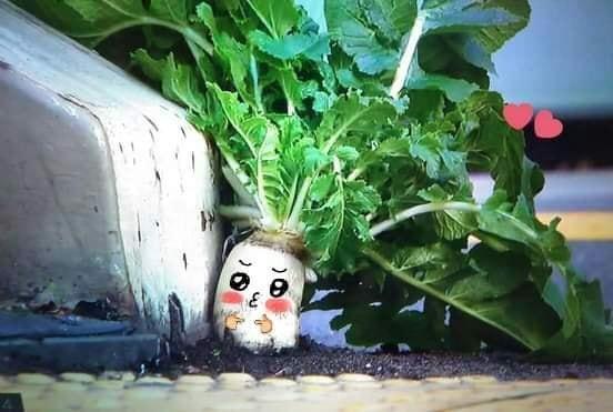 Số phận dễ đoán của cây củ cải trắng mọc nơi không tưởng thu hút dân tình đến check-in ầm ầm-7