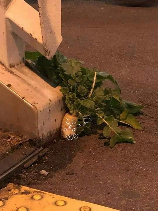 Số phận dễ đoán của cây củ cải trắng mọc nơi không tưởng thu hút dân tình đến check-in ầm ầm-8