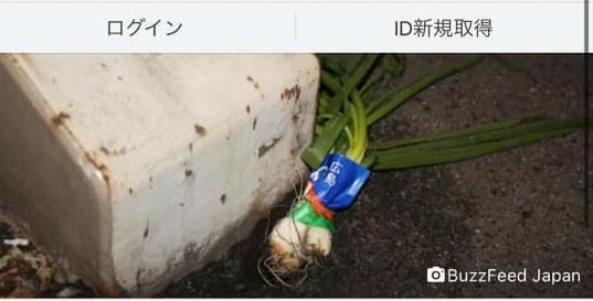 Số phận dễ đoán của cây củ cải trắng mọc nơi không tưởng thu hút dân tình đến check-in ầm ầm-10