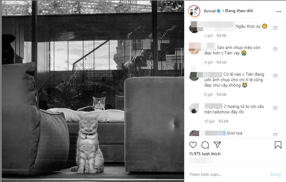 Chỉ lỡ tay đăng ảnh mèo, Hoàng Touliver bị hỏi tội: Chụp mèo sao đẹp hơn vợ?-1