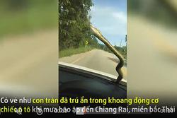 Clip: Tài xế thất kinh khi thấy rắn khổng lồ đột nhiên bò trên kính xe ô tô