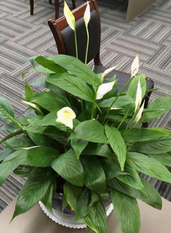 Không phải mê tín bạn cũng nên trồng 3 loại hoa này trong nhà, nở ra rất đẹp lại may mắn-2