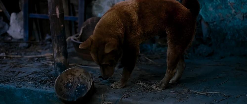 Cậu Vàng Shiba lấy lại thiện cảm khi khoe tài diễn xuất-5