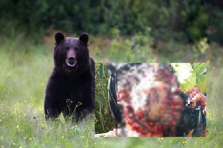Người dân Quảng Nam đi rừng sau lũ bị gấu tấn công, cào nát cả mặt lẫn người