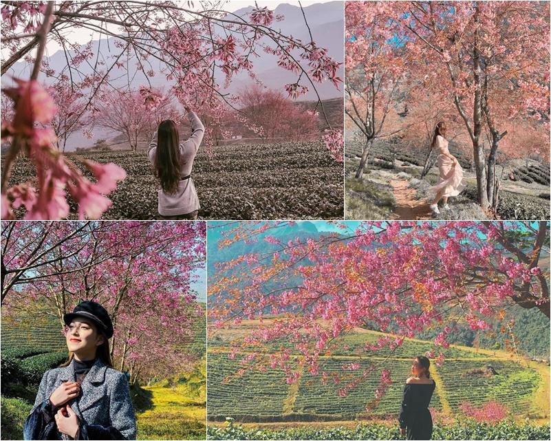 Giới trẻ ngẩn ngơ đón mùa xuân đến sớm giữa muôn sắc hồng của đồi chè Ô Long-2