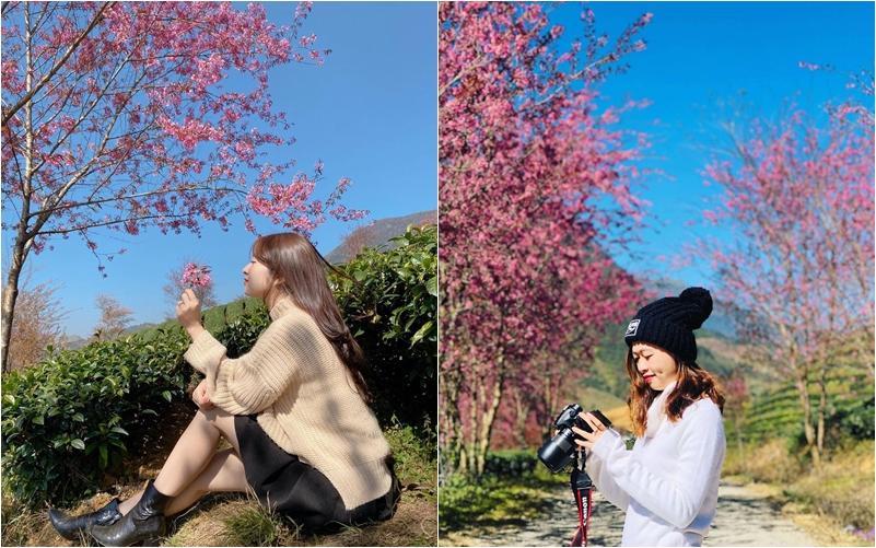 Giới trẻ ngẩn ngơ đón mùa xuân đến sớm giữa muôn sắc hồng của đồi chè Ô Long-3