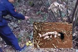 Phát hiện 'xác chết' trong rừng, ngã ngửa khi danh tính được hé lộ