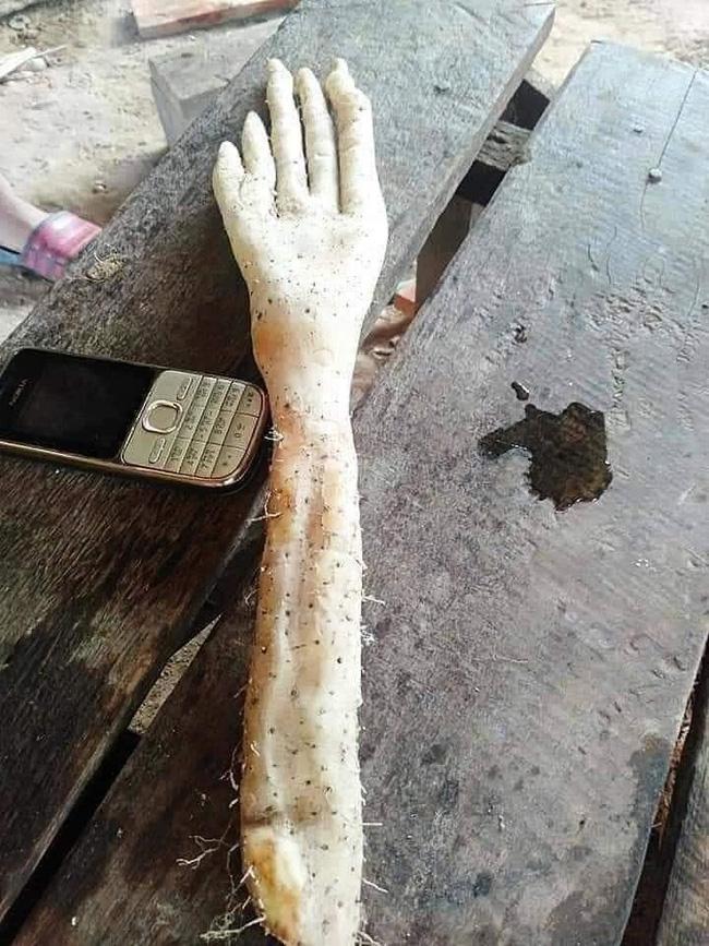 Củ khoai kỳ lạ có hình dáng giống bàn tay người khổng lồ khiến cộng đồng mạng xôn xao-1