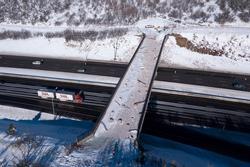Cầu vượt trị giá 5 triệu USD dành riêng cho động vật