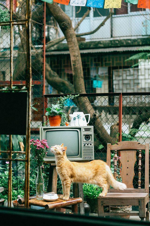 Những quán cafe đẹp lạ núp kỹ trong khu tập thể ở Hà Nội-3