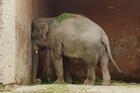 Con voi cô đơn nhất thế giới được trả tự do