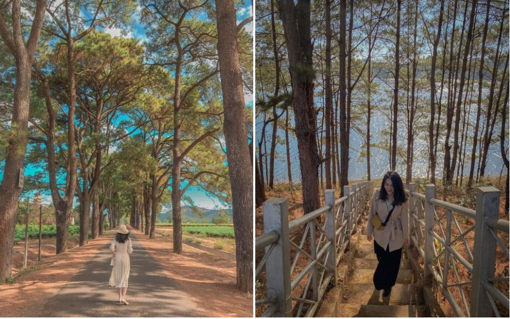 Check-in cảnh đẹp Gia Lai dịp Tết Dương lịch-2