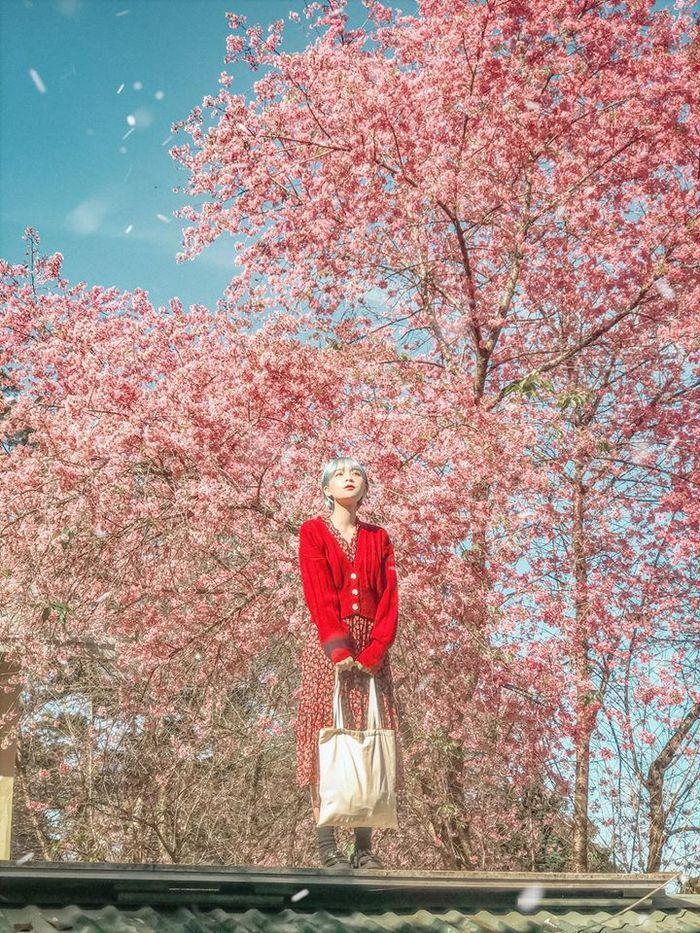 Những mùa hoa nở rộ cuối năm khiến tín đồ du lịch đứng ngồi không yên-2