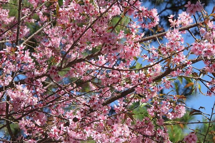 Những mùa hoa nở rộ cuối năm khiến tín đồ du lịch đứng ngồi không yên-4