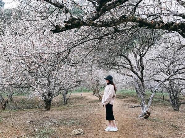 Những mùa hoa nở rộ cuối năm khiến tín đồ du lịch đứng ngồi không yên-7