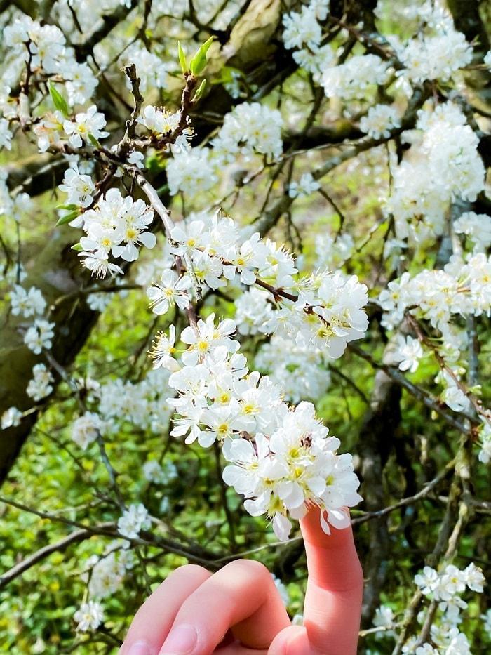 Những mùa hoa nở rộ cuối năm khiến tín đồ du lịch đứng ngồi không yên-8