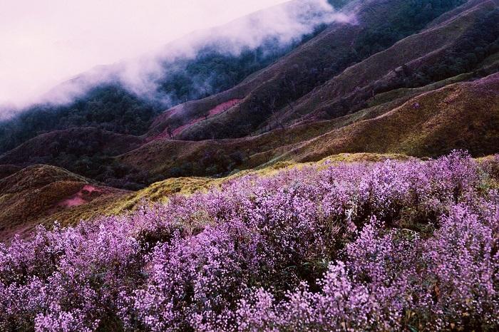 Những mùa hoa nở rộ cuối năm khiến tín đồ du lịch đứng ngồi không yên-14