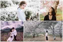 Những mùa hoa nở rộ cuối năm khiến tín đồ du lịch 'đứng ngồi không yên'