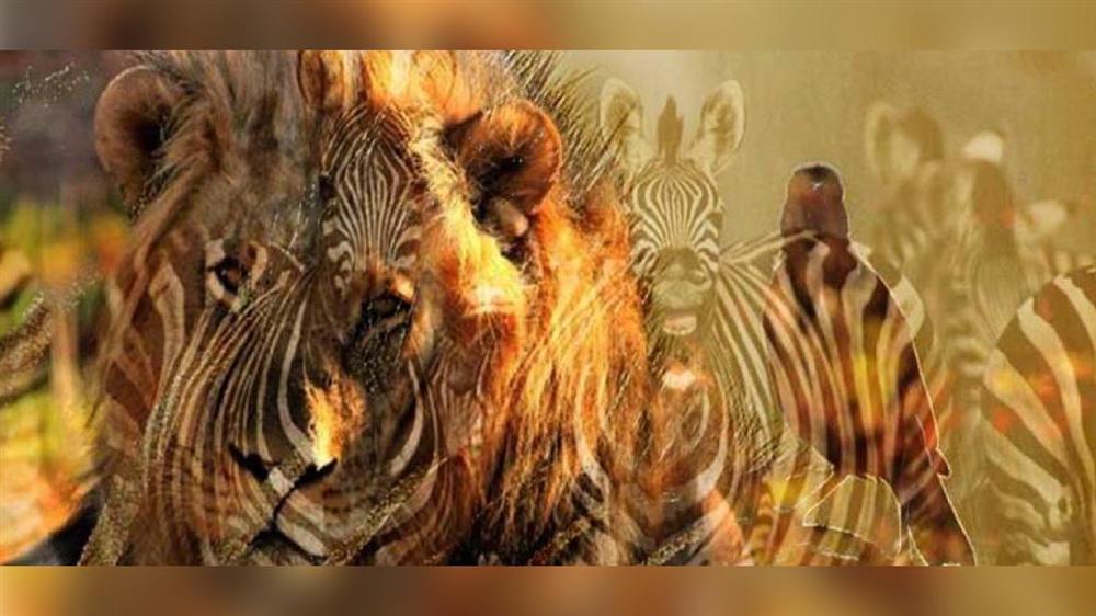 Bạn nhìn thấy sư tử hay ngựa vằn? Câu trả lời tiết lộ bí mật ẩn giấu trong tính cách của bạn-1
